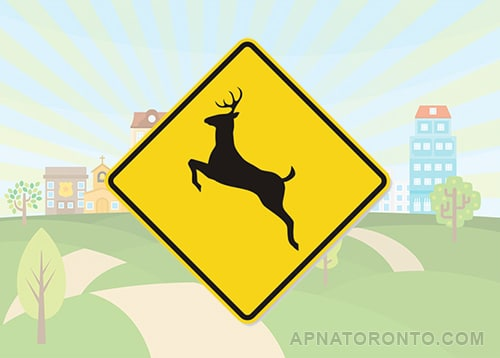 Deer regularly cross this road; be alert for animals